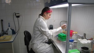Faculty of Science, yeast strain construction